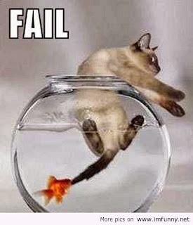 lolcat, fish bites cat, cat in fish bowl, cat in fishbowl, fish revenge