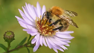 Bees and flowers communicate using electrical fields