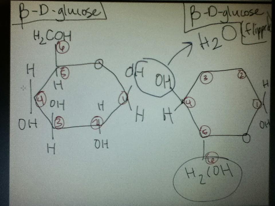Bio Geo Nerd: Bio Chemistry in Plants H2coh
