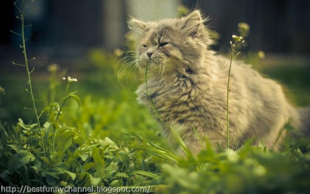 Cute cat in the grass.