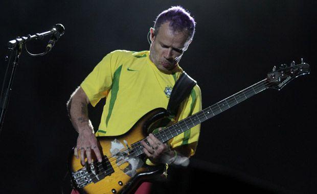 Flea in Brazil