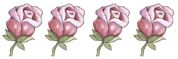 rosas rosas para tarjetas