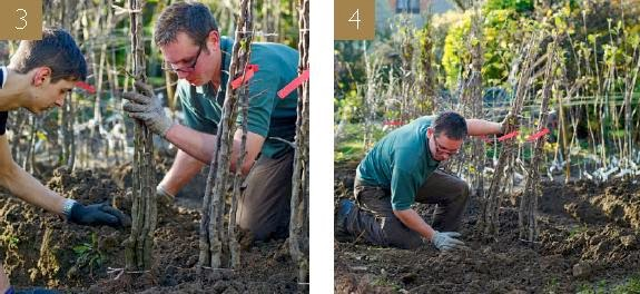 Garden tips on HOW TO PLANT IN STOCK BEDS