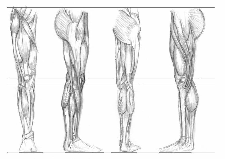 Lujo Músculo Dibujo De La Anatomía Patrón - Anatomía de Las ...