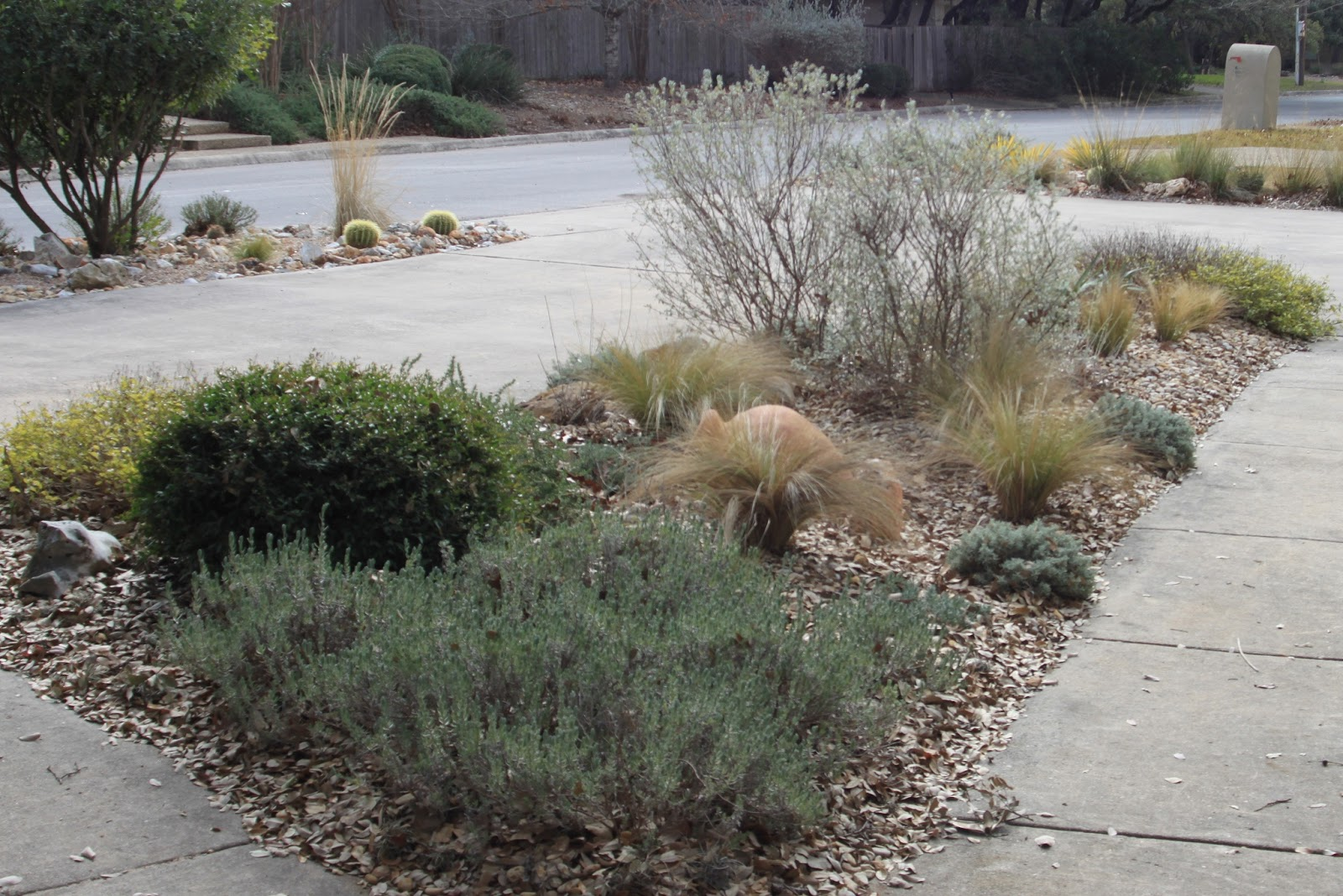 Rock oak deer winter garden projects removing texas sage for Winter garden