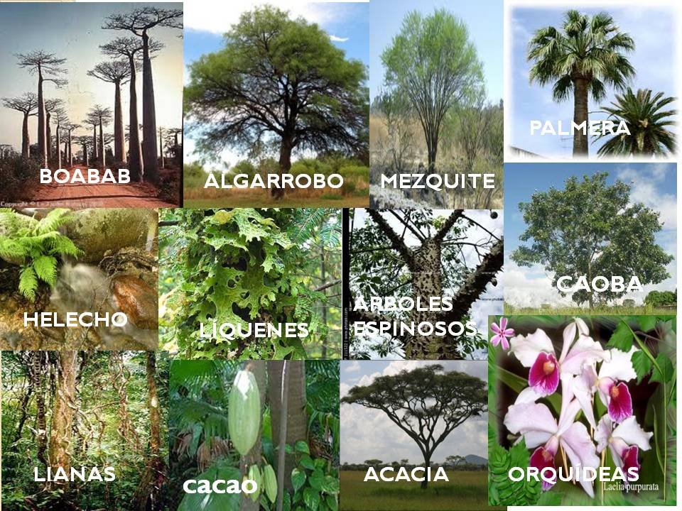 Ecologia: Sabana y Pradera