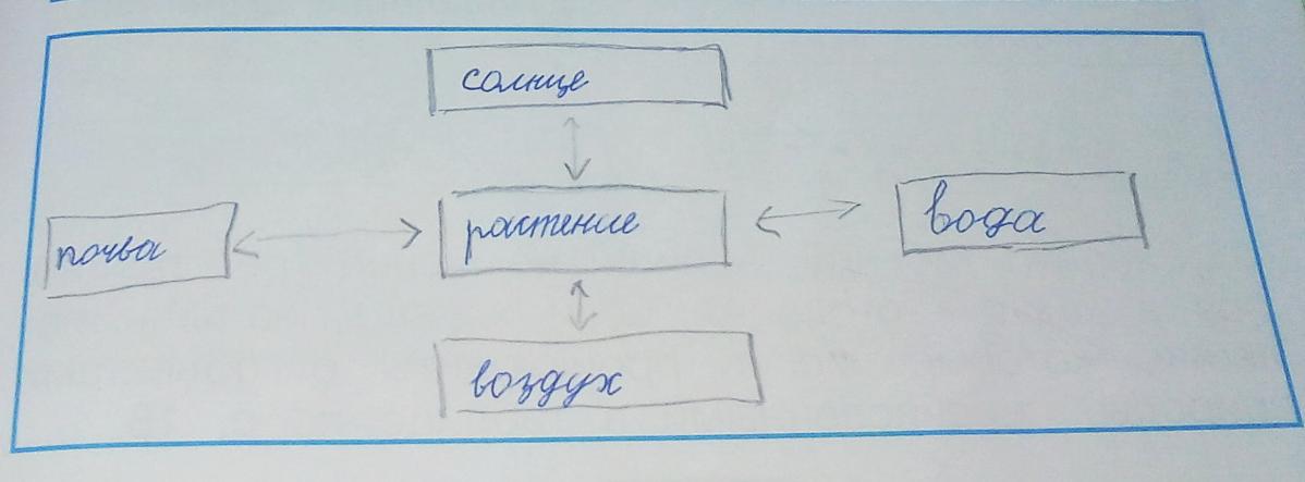 связи между живой схема 2 класс