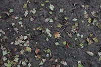 Download Little leaves on muddy ground texture pack