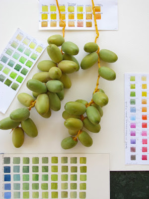 Photo of unripe dates with colour charts