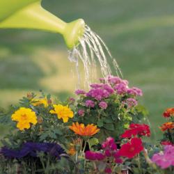 arrosoir et fleurs dans un jardin