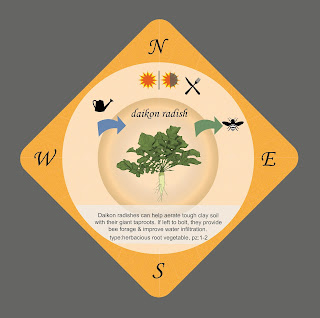 Permaculture playing card Daikon Radish from Food Forest Card Game