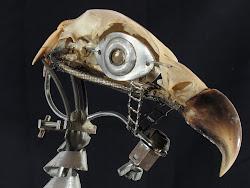 vulturus metallicus 1