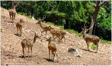Taptapani Deer Park, Berhampur