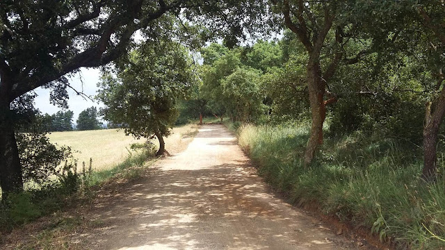 country road, photos, wordless wednesday