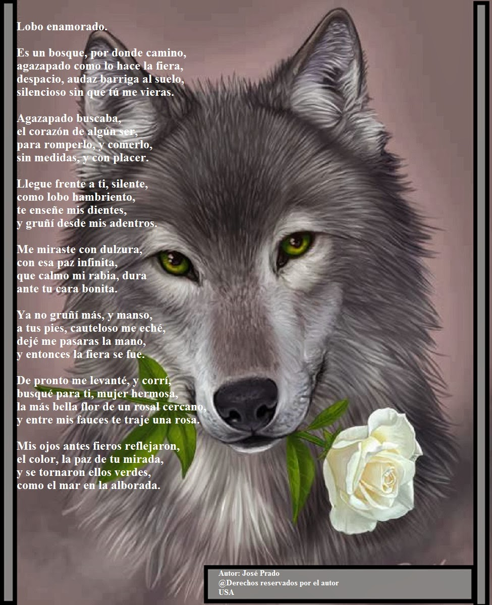 Poemas de amor para ti: Lobo enamorado