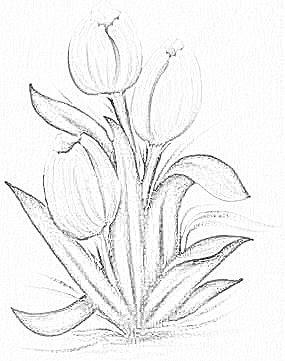pintura em tecido tulipas risco