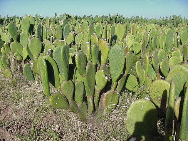 Xtremehorticulture of the desert all desert plants need - Advantages of cactus plant ...