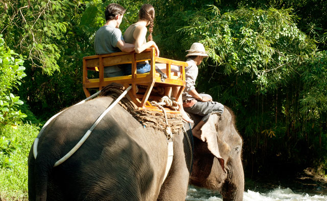 Bali Zoo Park Long Trek Elephant Back Safari Package - Singapadu, Sukawati, Gianyar, Bali, leisure, Attraction, Zoo, Adventure, Package