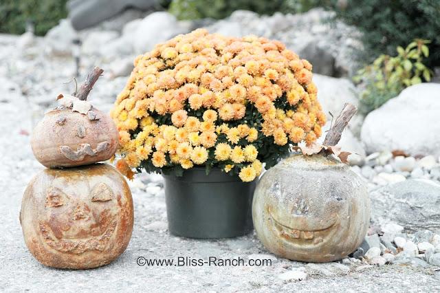 IMG_8020 Rit dye cement pumpkins