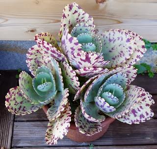 Plantas de exterior de pocos cuidados - Plantas de exterior resistentes al calor ...