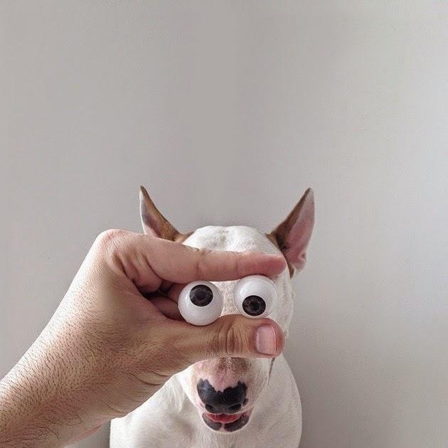 cute-dog-3
