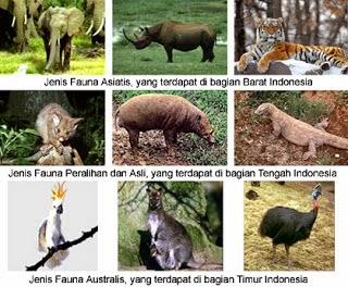jenis fauna asiatis gajah badak harimau fauna peralihan dan asli Indonesia tengah babi rusa komodo, jenis fauna australis merak kanguru kakak tua