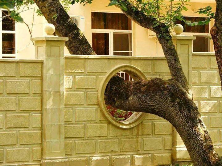 Pohon melewati tembok