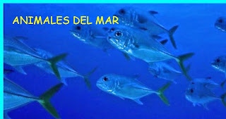 http://www.chiscos.net/almacen/lim/animales_del_mar2/lim.swf?libro=animales_del_mar2.lim