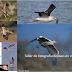 Taller fotográfico de aves en vuelo