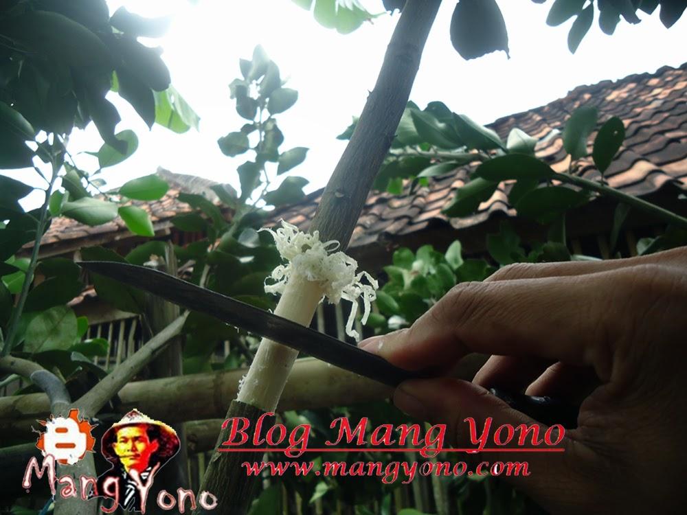 Poto 3. by Mang Yono
