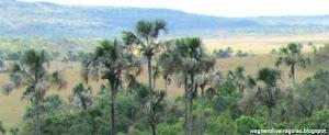 Parques de Veredas