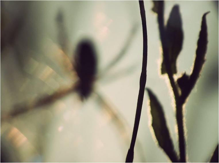 emphoka, photo of the day, Maria Komlósy, Fujifilm FinePix HS10