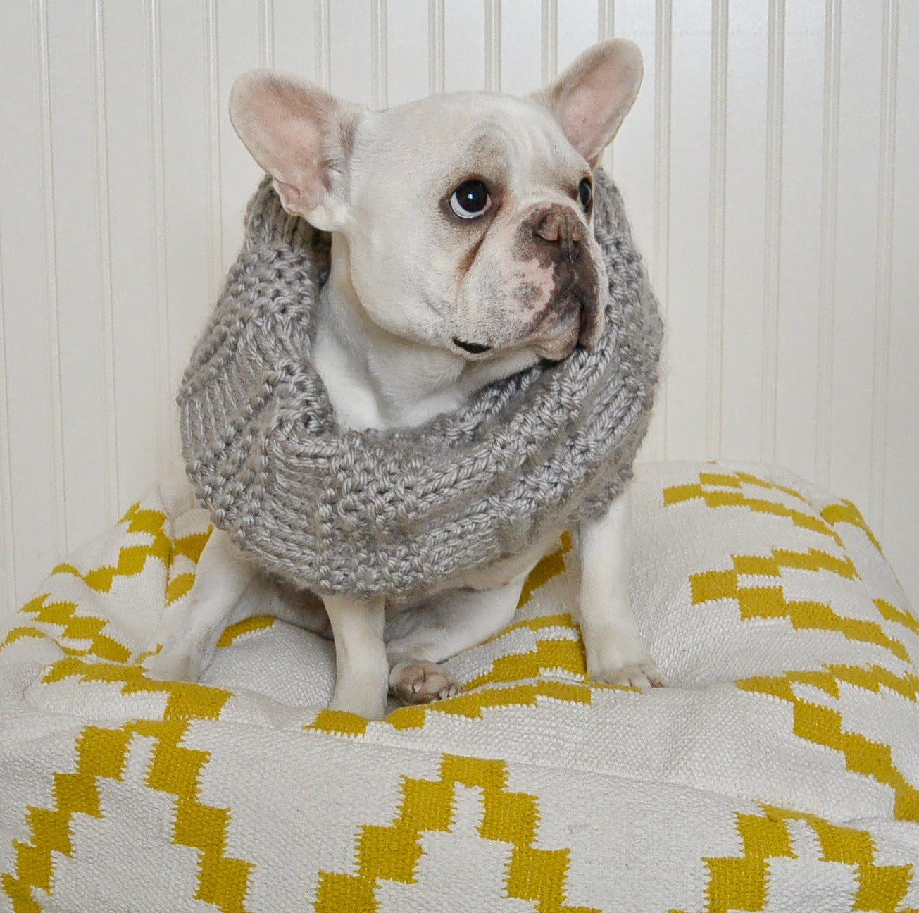Dog Cowl Knitting Pattern : Scarves and Cowls - Oh My!   Mama In A Stitch