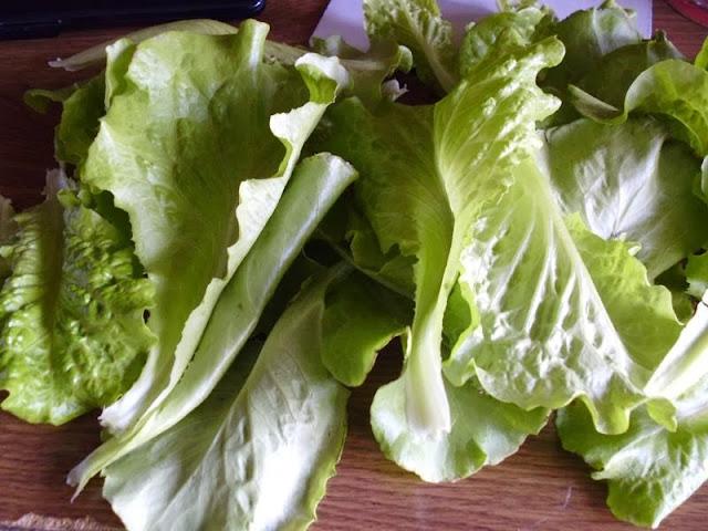 Nevada Lettuce Harvest