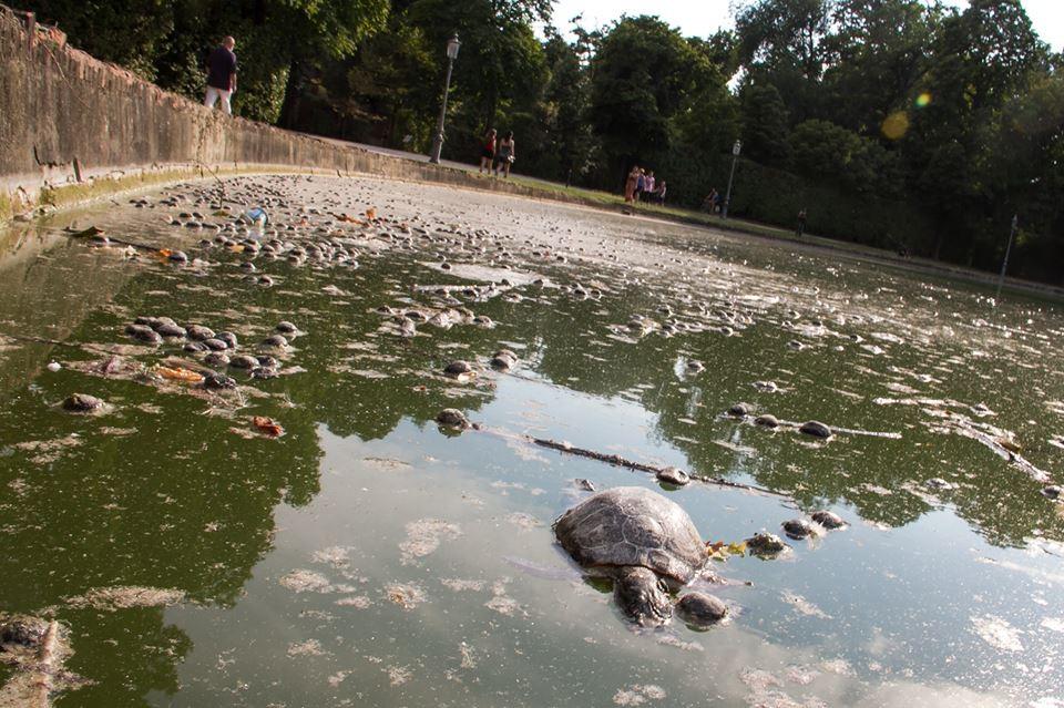 Allevamento amatoriale tartarughe acquatiche dalle for Tartarughe nel laghetto