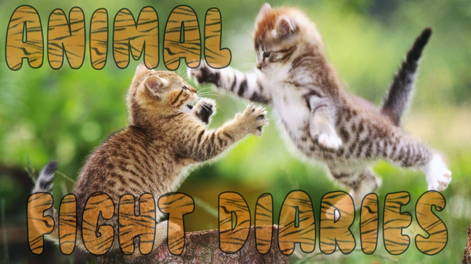The Onion's Animal Fight Diaries