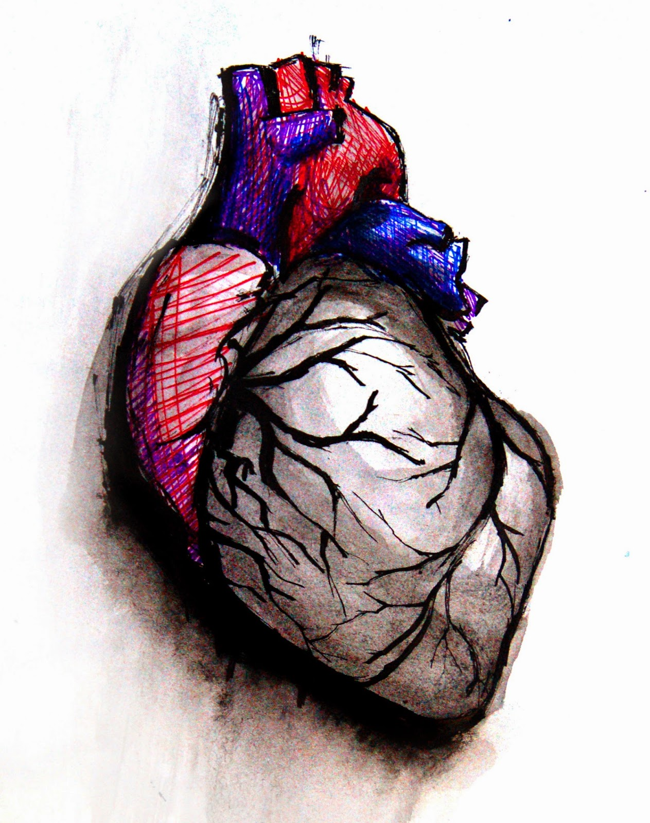 Fakta Ilmiah mengenai Jantung Manusia