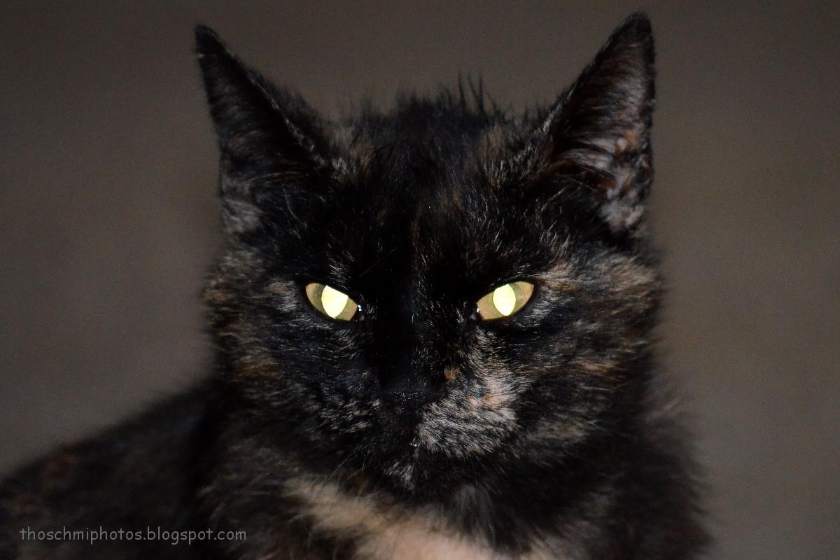 cat door dimensions