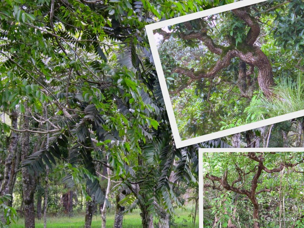 Via Natureza Trilhas Ecológicas do Jardim Botânico de Brasília