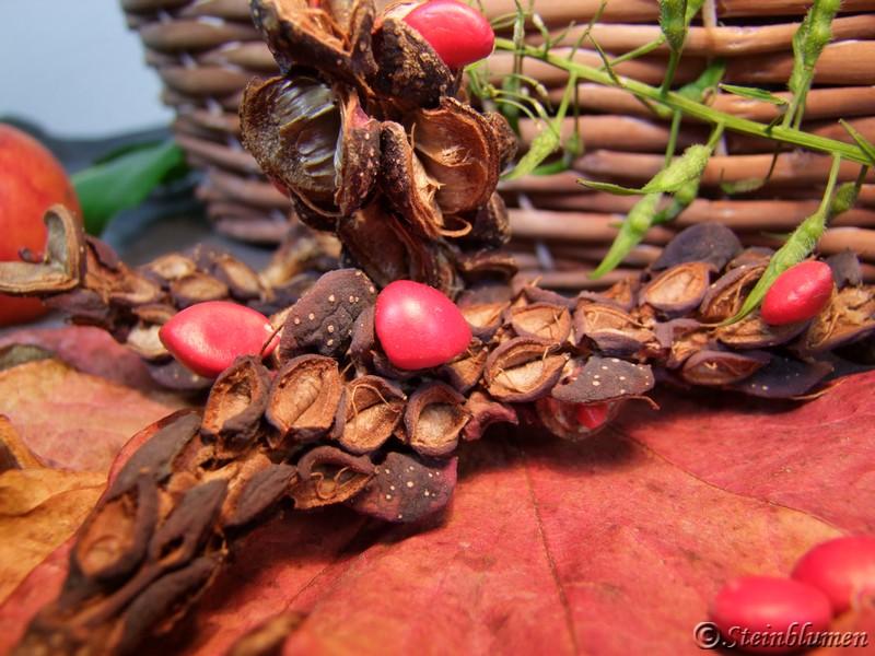 Magnolienfrüchte