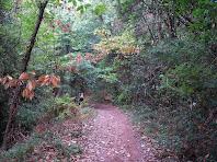 El sender, magnífic de vegetació, s'acosta a les cingleres del Castell Bernat