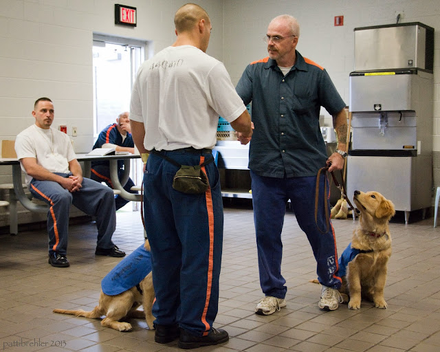Two men, in the middle of the picture, are shaking hands while their golden retriever puppies sit calmly next to them. Two inmates are sitting in the background.
