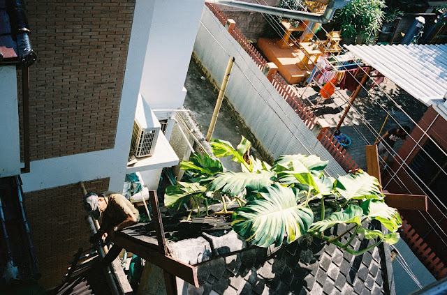 Color film Photography Bangkok of treetops