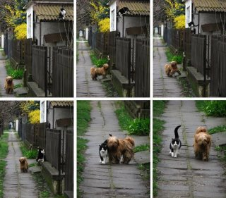 Cat walking Dog