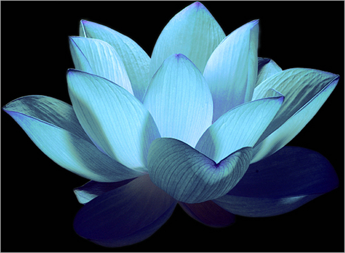 gratis porrbilder blue lotus massage
