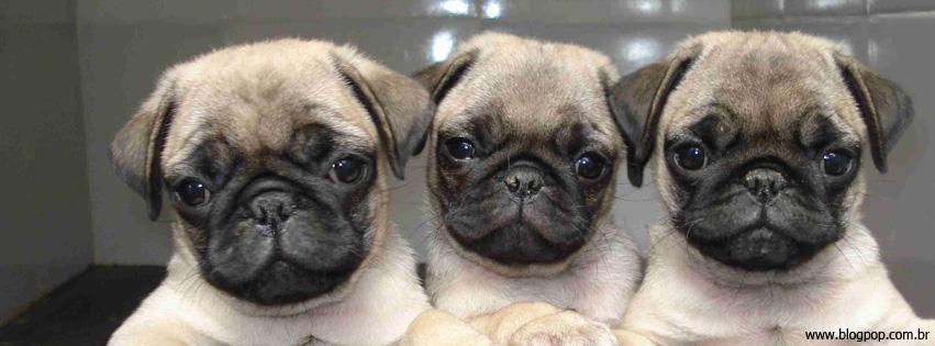 Capas para Facebook com fotos de Cachorros e frases