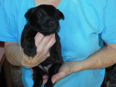 female pup #2 BLACK - Paul Murphy
