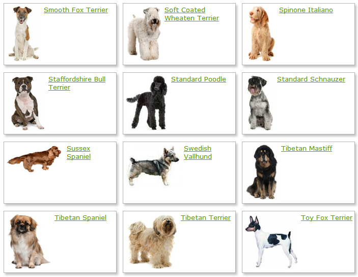 Dog Breeds List Dog Breed Portal Blog