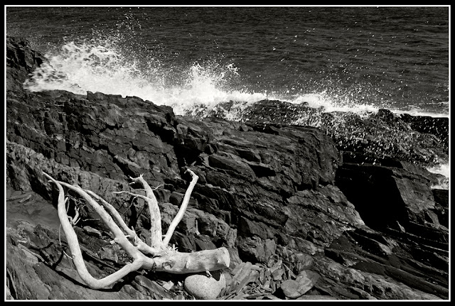 Nova Scotia; Gaff Point; Surf; Wave; Driftwood