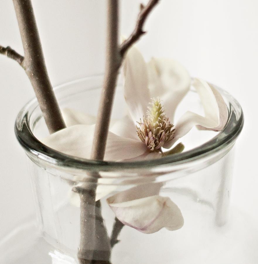 Eine Magnolienblüte im Glas, ganz zart